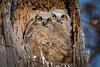 Owls-0907