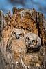 Owls-0894