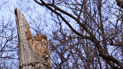 Owls-0902