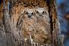 Owls-0911