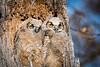 Owls-0918