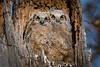 Owls-0910