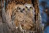 Owls-0908