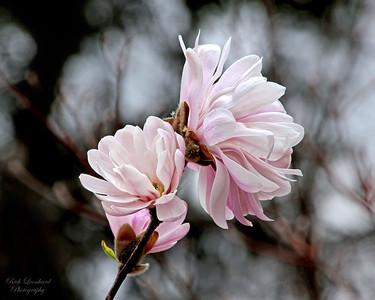 Pretty flowers near Gerry Park,Roslyn,NY.