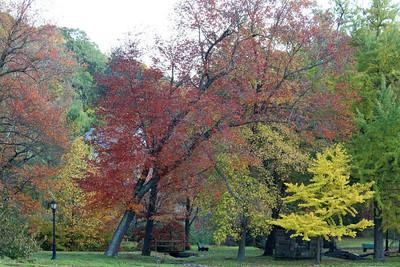 Fall foliage in Gerry Park,Roslyn,NY.