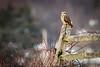 Owls-0520