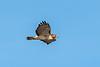 Owls-0127