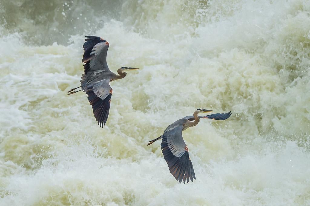 Great Falls-3565
