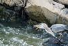 Great Falls-3285