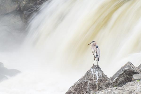 Great Falls and Meadowlark-6240