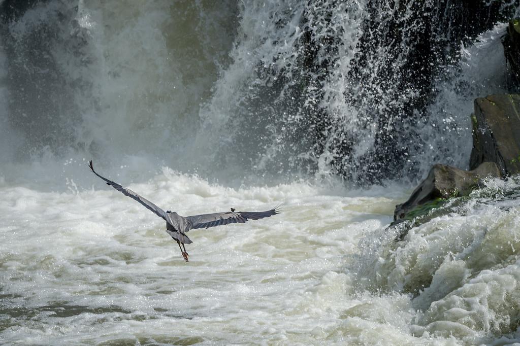 Great Falls-3322
