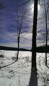 Hickory Tree Reflections
