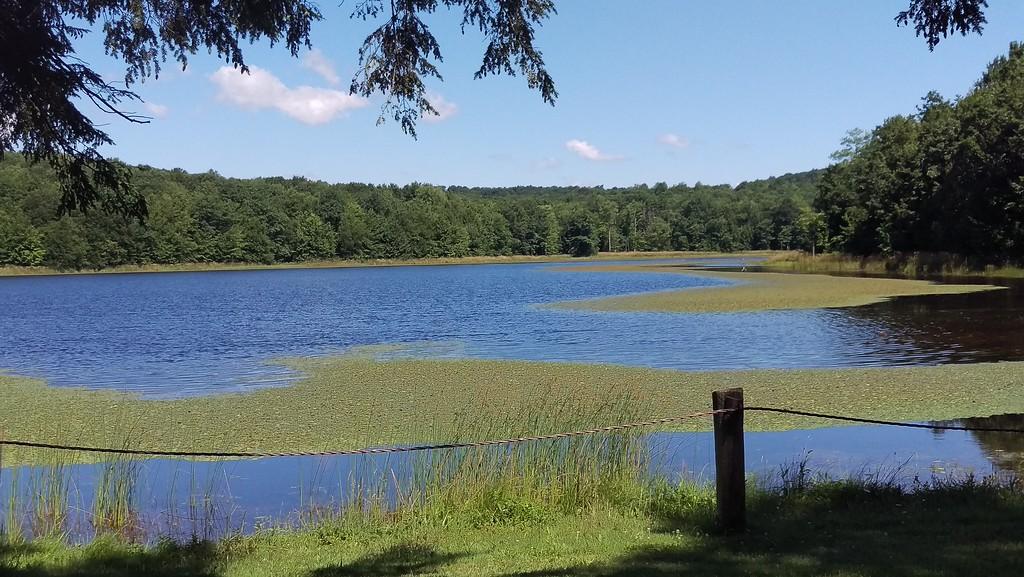 The Waters of Hemlock Lake