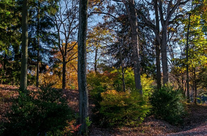 Hunsicker's Grove - Mertztown, PA - 2017