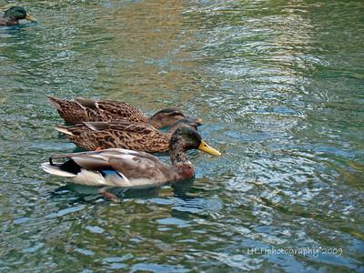 Laguna Lake Park, Fullerton, CA