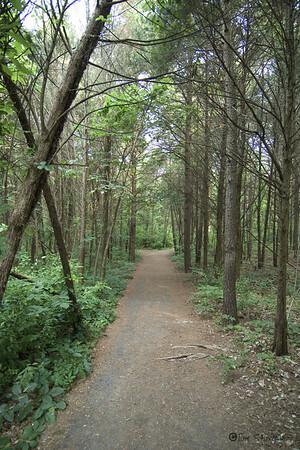 A walk in EC Lawrence Park.