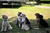 Buddy, Finn, Daisy, unknown, Maxi, Maria