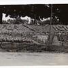 Miller Park Victory Garden V (00195)