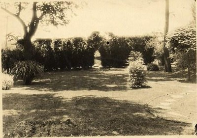 Tall Shrub Garden (00254)