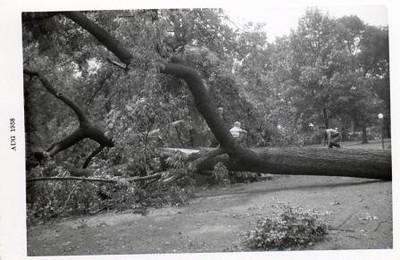 Storm Damage II (00561)