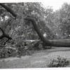 Storm Damage II (00561)