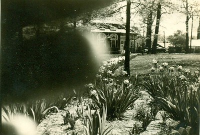 Miller Park Irises in Bloom  (06635)