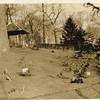 Gazebo in Miller Park (00260)