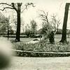 Miller Park Flowering Trees  (06638)