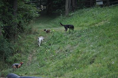 Maxi, Rocco, Oden & Kaiya