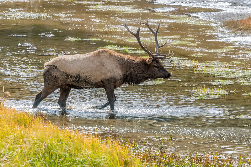 ELK with RACK, PACE, POSTURE  and ATTITUDE