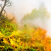 FERNS in the MIDST of the MIST