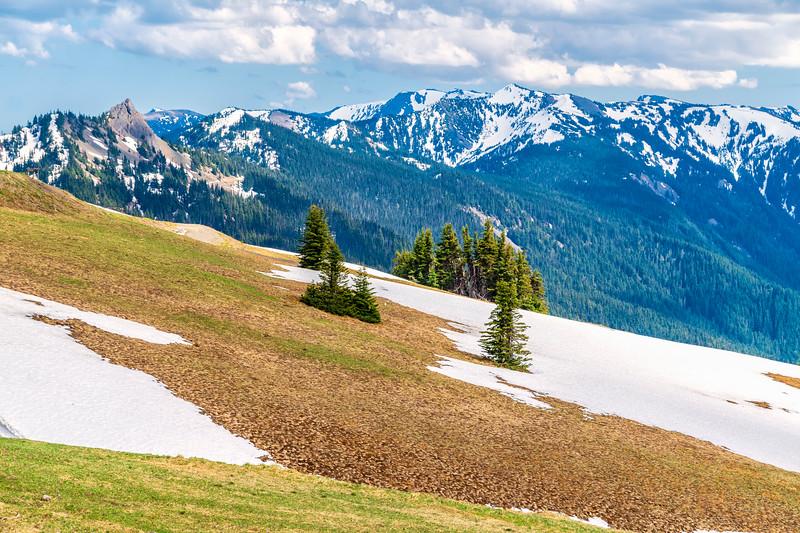 OLYMPIC MOUNTAINS & HURRICANE RIDGE