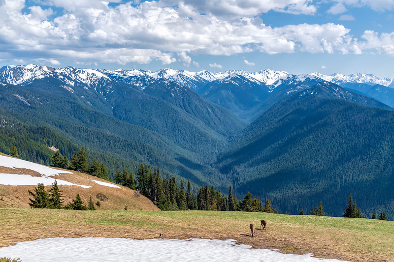 OLYMPIC MOUNTAINS - HURRICANE RIDGE