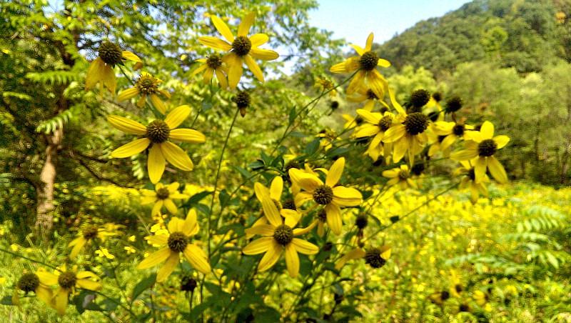 Summer Wildflowers at Old Smicksburg