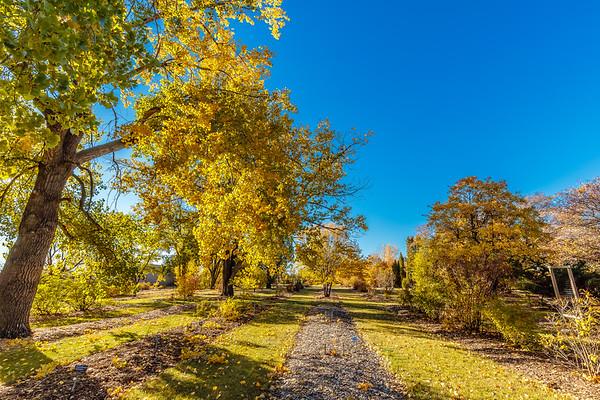 Patterson Garden