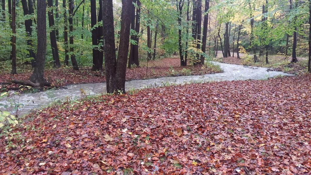 A fall rain has filled Tom's Run to capacity.    10.21.16