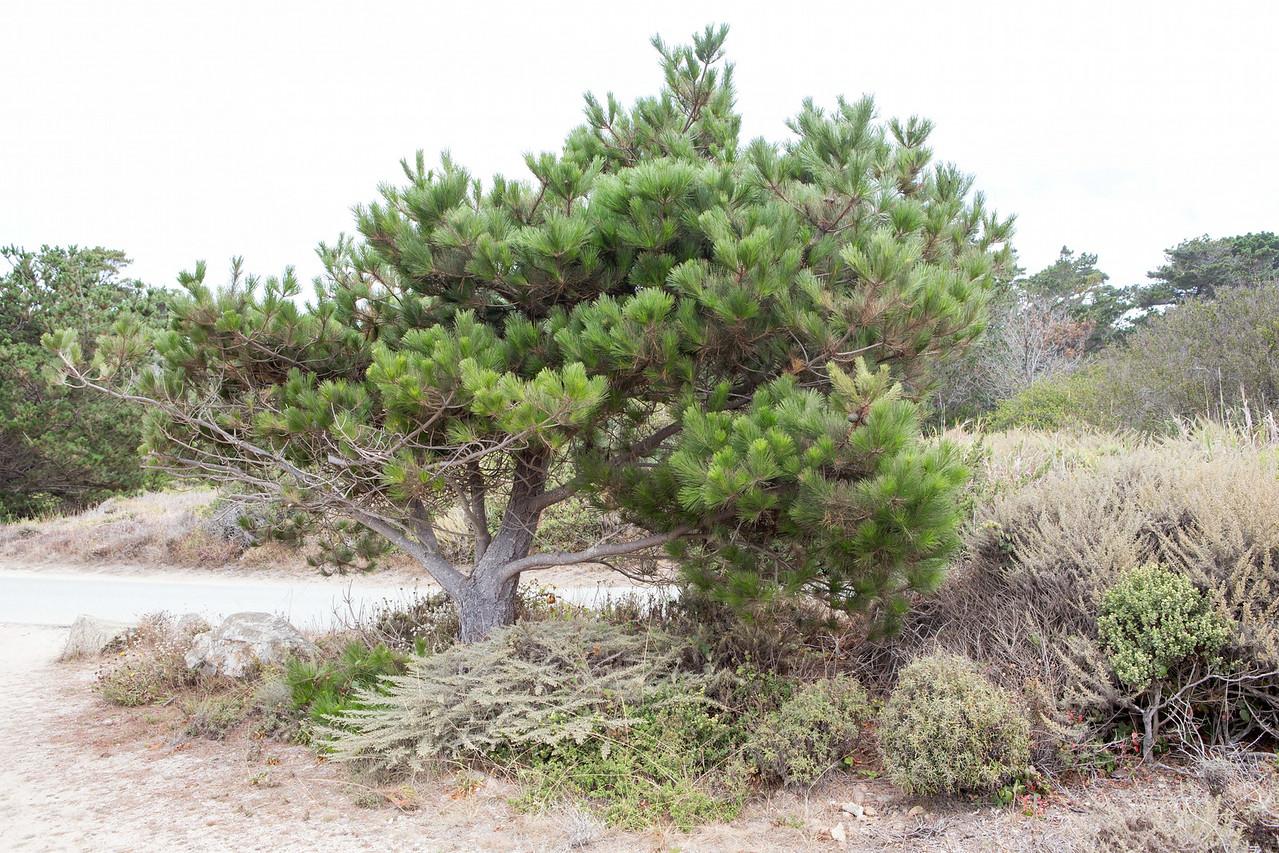 Monterey-6411