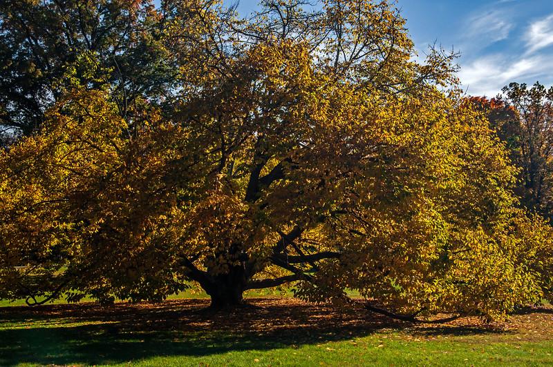 Trexler Park - Allentown, PA - 2015