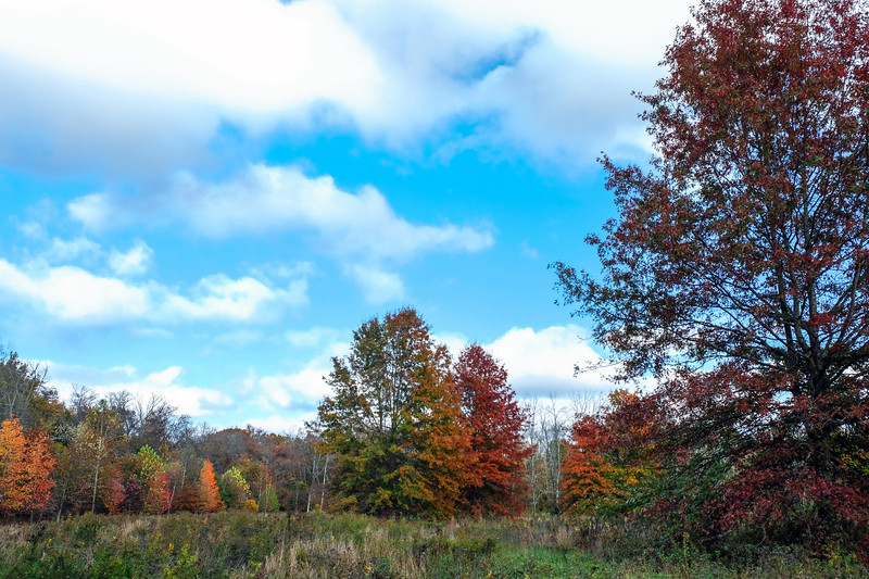 Warwick County Park - Chester County, PA - 2020