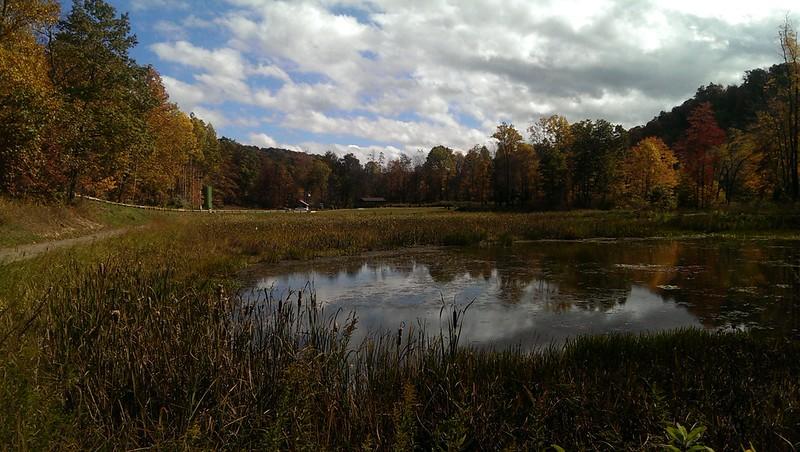 Fall at the Wetlands