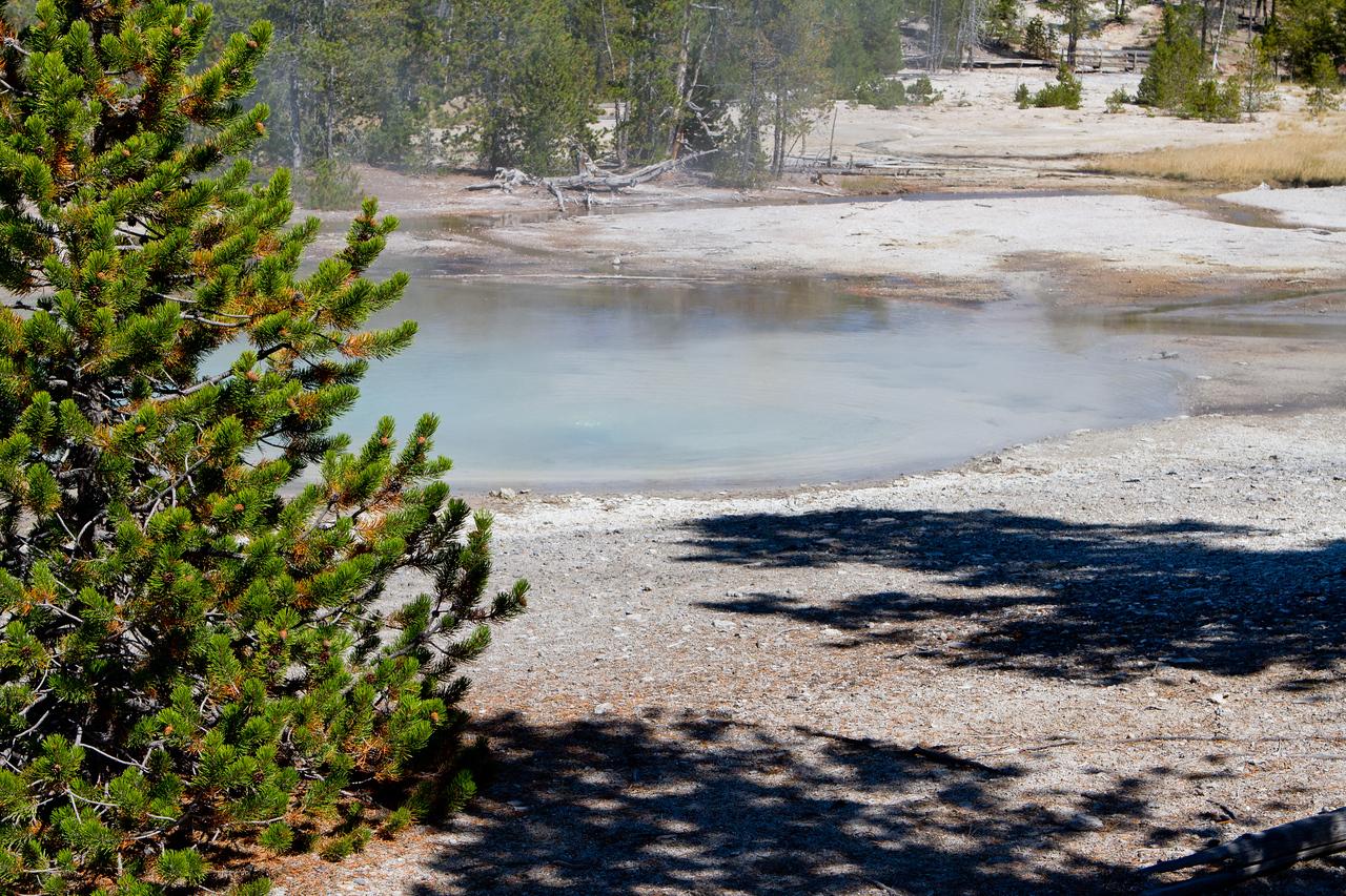 Yellowstone-1455