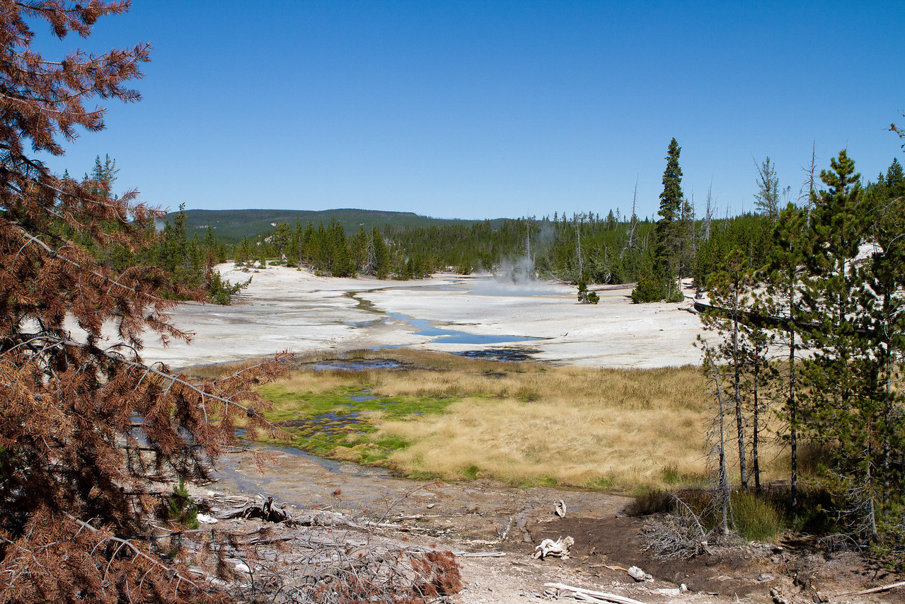 Yellowstone-1477