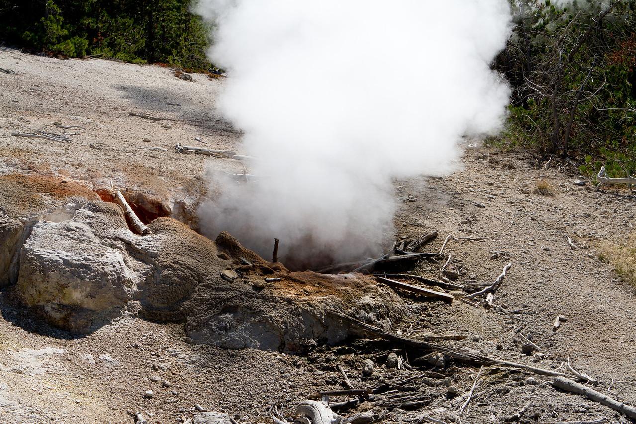 Yellowstone-1466