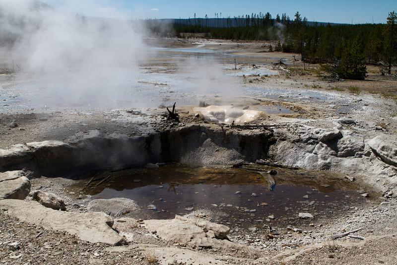 Yellowstone-1583