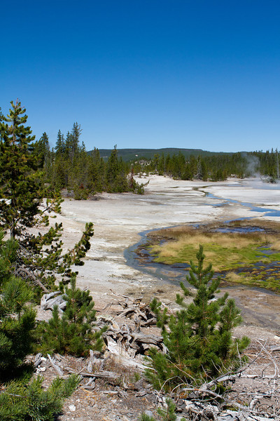 Yellowstone-1479