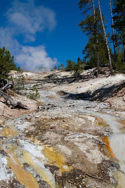 Yellowstone-1443