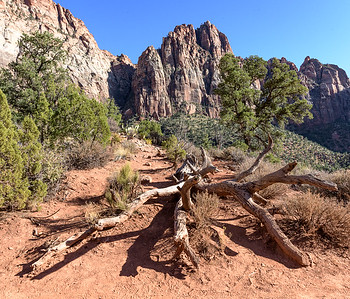 Near the top of the Watchman Trail