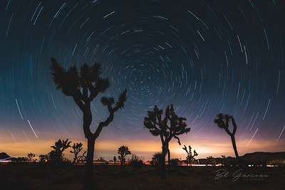 Star Trails in Joshua Tree