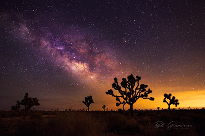 Milky Way and Joshua Trees