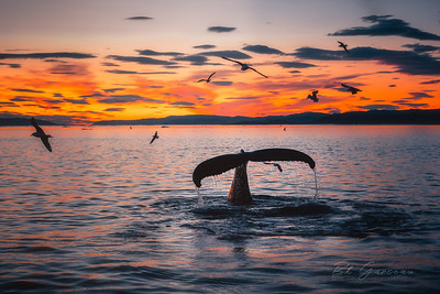 Whales, Sails and Sunrise